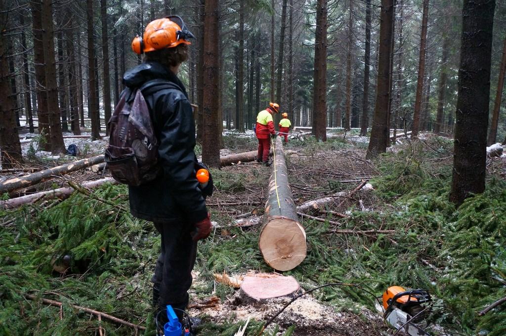 Formation adulte technicien forestier